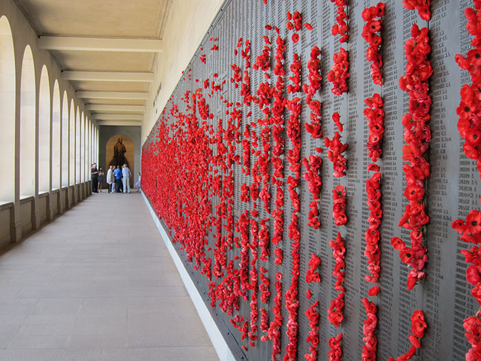 pigeon-poppies-nest-remembrance-day-australian-war-memorial-6-5dc91e8a58f52__700