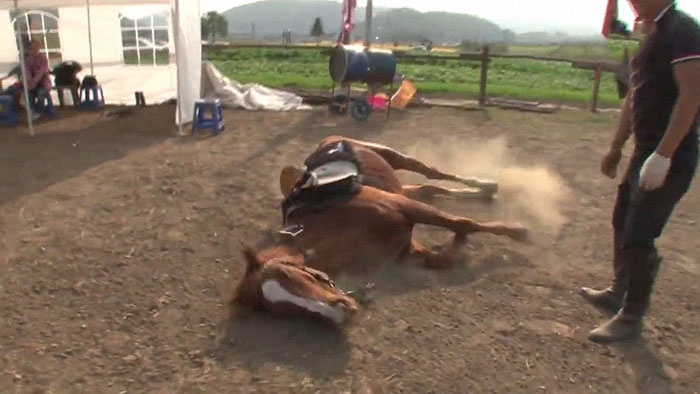 funny-lazy-horse-play-dead-jingang-1-6-5dad7ac5867bb__700