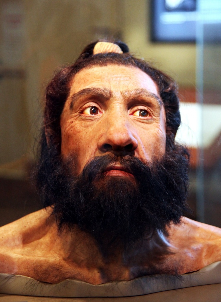 Homo_neanderthalensis_adult_male_-_head_model_-_Smithsonian_Museum_of_Natural_History