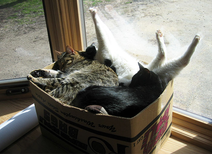 if-it-fits-i-sits-post-your-photos-of-cats-fitting-into-tightest-spaces-102-597b2c0bda1ee__700