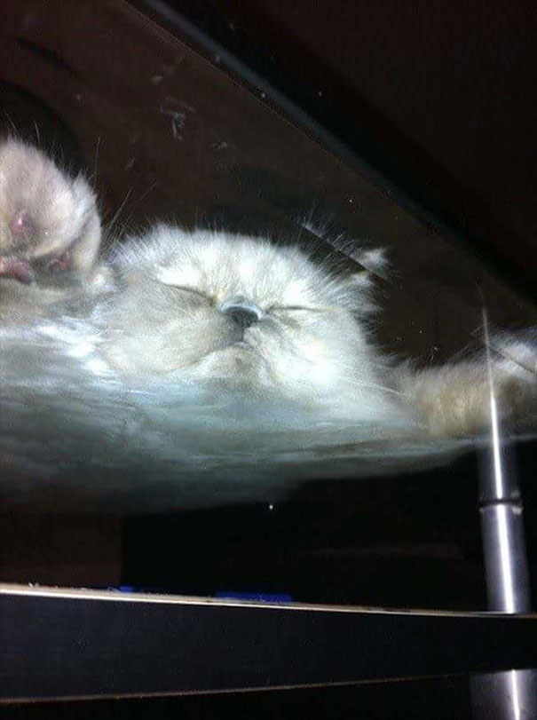 cats_on_glass_014
