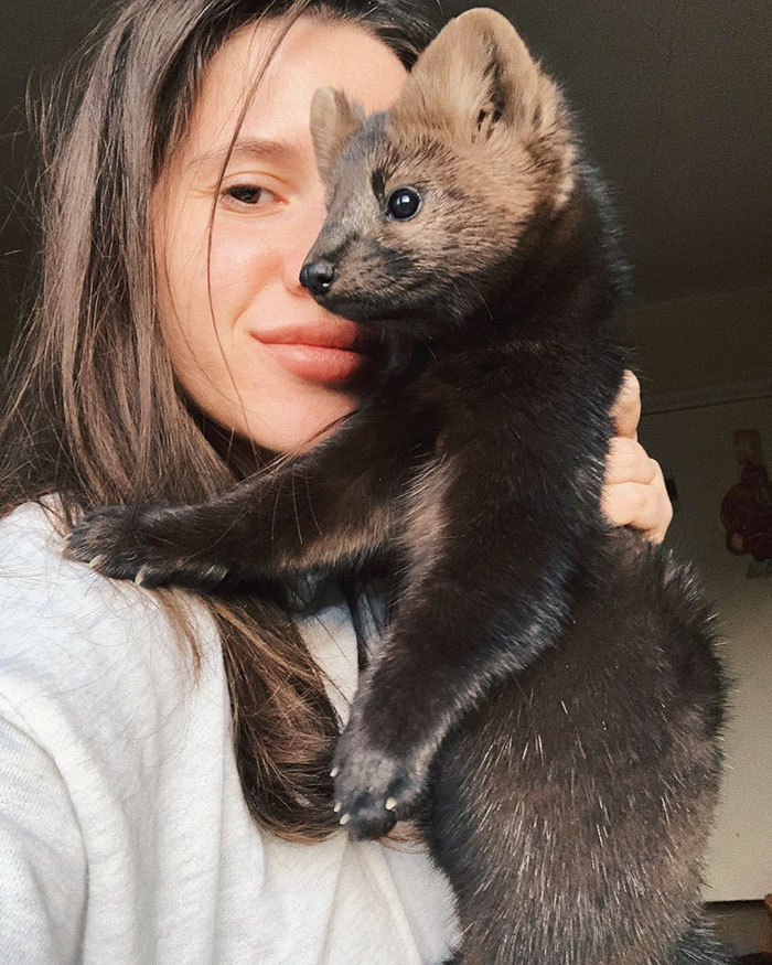 russian-woman-saves-sable-from-becoming-coat-22-5de0eb9cd38d0__700