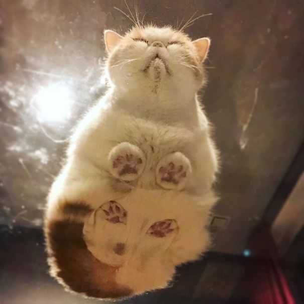cats_on_glass_032