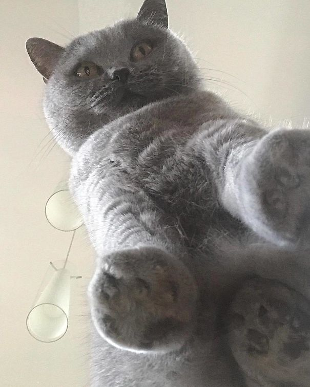 cats_on_glass_031