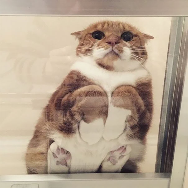 cats_on_glass_010