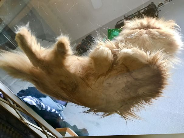 cats_on_glass_040