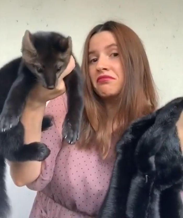 russian-woman-saves-sable-from-becoming-coat-2-5de0eb7778229__700