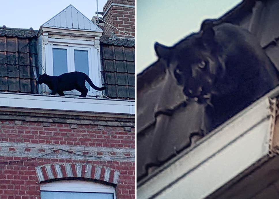 panther-roof-composite
