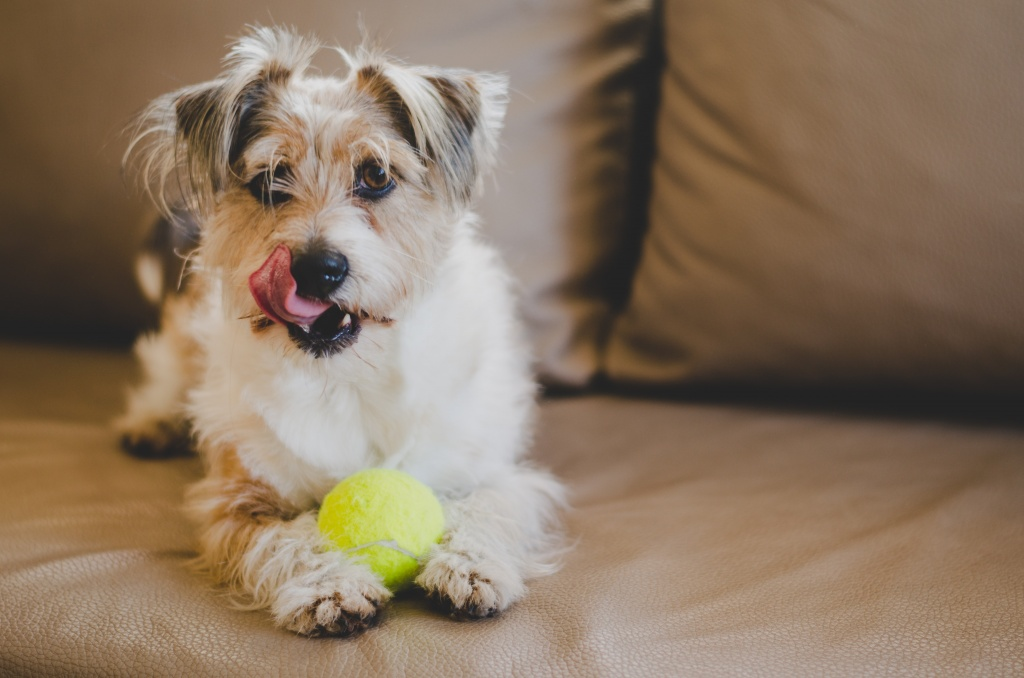 adorable-animal-ball-2013662