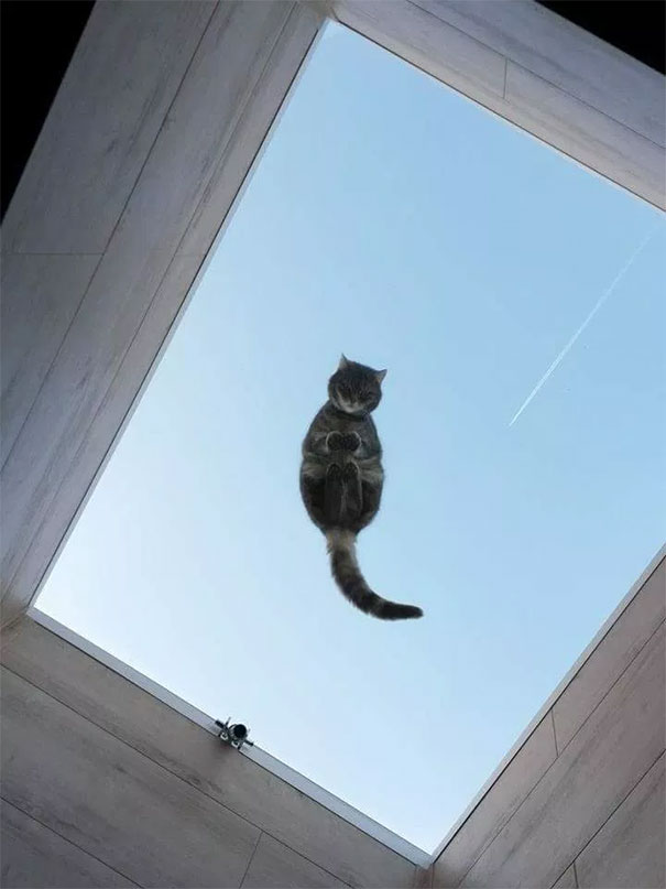 cats_on_glass_015