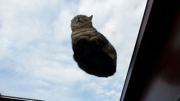 cats_on_glass_002